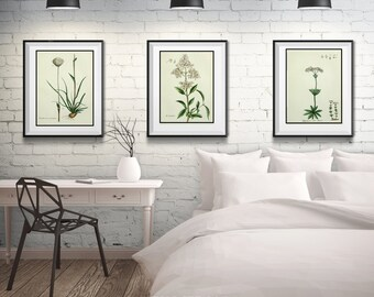 Botanical Print Set of 3, Matted and Framed, 3 Floral Prints, Free Shipping, A Variety of Sizes and Styles, White Flower Prints, Framed Art