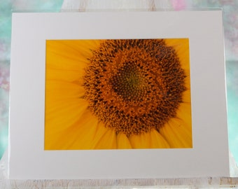 Sunflower closeup photo, matted