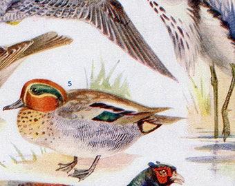 Set of Four Vintage Bird Charts #1