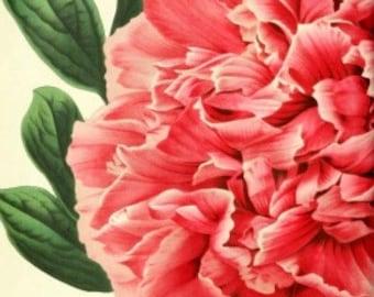 Peony - Cross stitch pattern pdf format