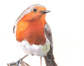 Robin Painting  2014- Christmas Decor  bird print of watercolor painting R7515 - 5 by 7 print wall art print - bird art print
