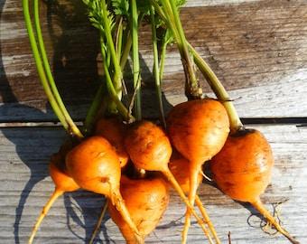 Paris Market Carrots from my garden,Mini round carrots heirloom seeds 100 seeds