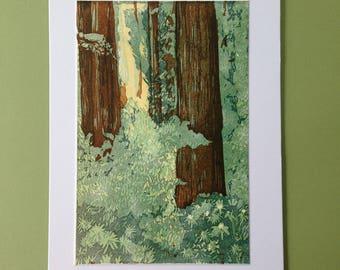 Redwood Forest, Letterpress print