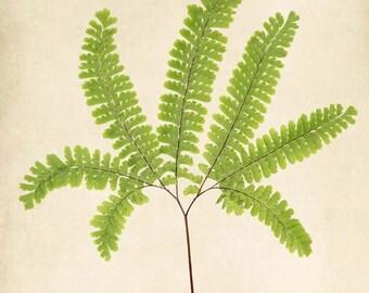 Botanical Print, Maidenhair Fern Art, Wall Art, Nature Photography, Woodland, Wall Decor, Fern Print, Botanical Art
