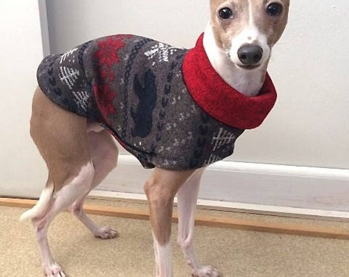 "Italian Greyhound Sweater. ""The Bear Sweater"" - Italian Greyhound sizes"