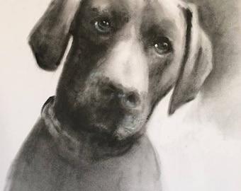 pet portrait, custom pet portrait, dog portrait, pencil pet portrait, hand drawn portrait, pet drawing, dog drawing, pet illustration,