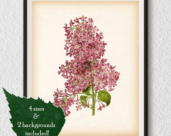 Digital print, Lilac print, Vintage flower print, Lilac illustration, Home wall decor, Floral print, Antique botanical print, Download, #90