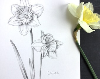 Daffodils - original drawing