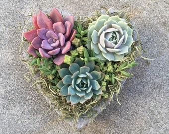 SUCCULENT HEART PLANTER, Mother's Day Gift, Thank You Gift, Birthday, Get Well, Bridal, Sympathy,Bereavement, Succulent Planter, Easter