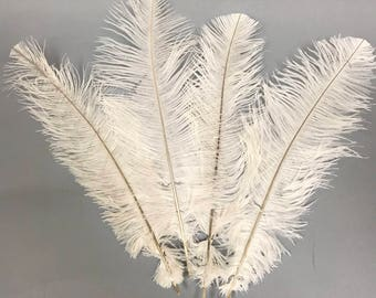 """Ostrich Feathers 12-14"""" - 100 Pack"""