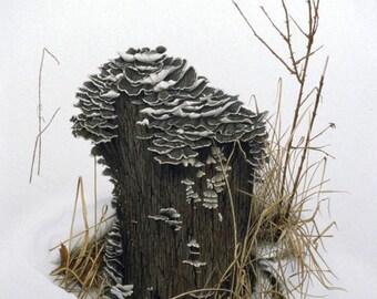 Snow Stump with Turkey Tail Fungus