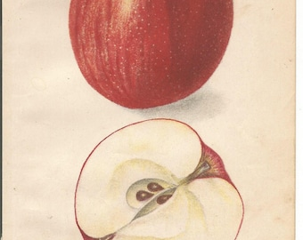 Antique Mother Apple Dept. of Agriculture Book Plate 1909