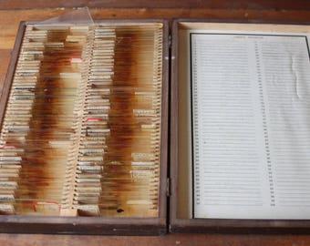 Vintage Medical Slides, Histology Slides, Human and Dog Tissue Sections, Medical Oddity, 100 Slides