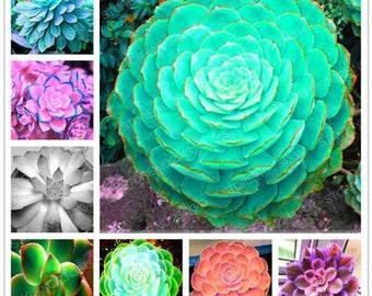 100pcs/bag Mix Succulents Seeds Rare Stone Lotus Bonsai Plants Seed For Home Garden Flower Pots Planters Semillas