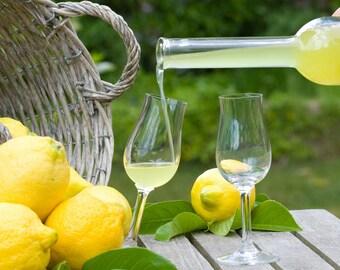 Limoncello Perfume Roll On Fragrance Oil Bottle Bath & Body Works Type Lime Orange Scent