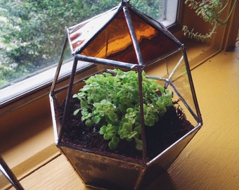 Favus Terrarium - Hanging Glass Terrarium - for small succulent -- stained glass -- terrarium supplies -- eco friendly