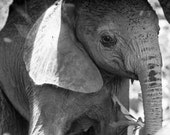 Cute Baby Elephant Photo,...