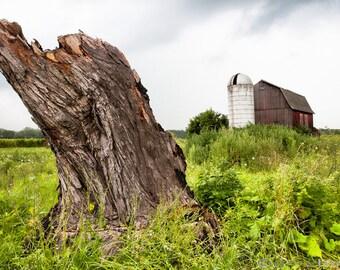 Tree stump, Old Barn, Silo, Farm, Rustic Color Landscape Photograph, Nature, Original Fine Art Photography Print, Signed.