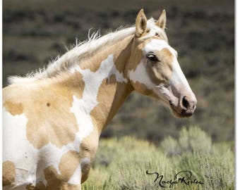 "Palomino Pinto Mustang 2""x 2"" Magnet - Sand Wash Basin Wild Horse Meteor, mustang magnet, palomino paint, northwest Colorado"