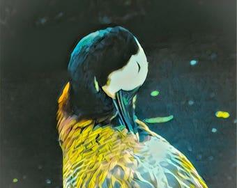 The Happy Spring Goose