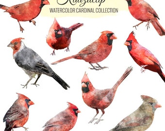 Watercolor Cardinal Collection - Commercial and Personal Use