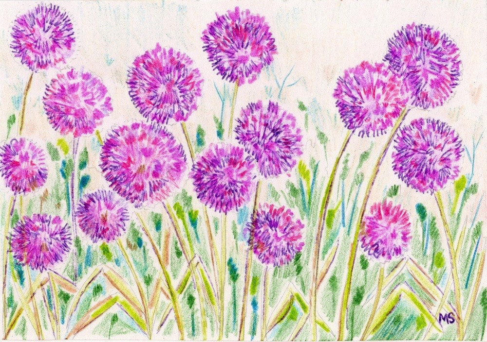 Allium Garden Flower Art Print Colored Pencil Ink Drawing