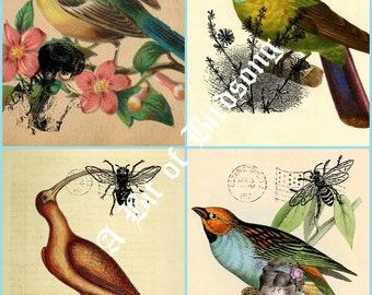 Vintage Bird Journal Cards digital download. 2 sheets - 8 Bird Cards. Each sheet 8-1/2 x 11 inches.  Vintage birds, vintage postcards digi.