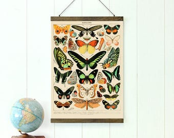 Pull Down Chart, Butterfly Educational Chart Diagram, Drop Down Chart, 20 inches x 27 inches, Butterflies, Vintage Style, Tropical Style