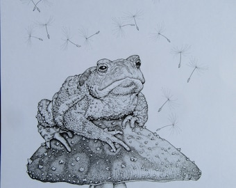 Toad on Toadstool, pen and ink, illustration, drawing