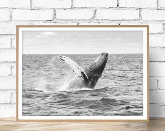 Whale Print, Whale Art, Whale Decor, Black White Photo, Wall Art, Black White Animals Photo, Art Print, Animals Print, Digital  Download