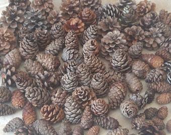 Pine Cones, Mix