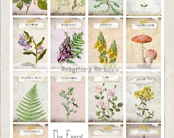 The Faery Hedgecraft Cards, Faery Magick and Folklore