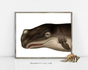 Whale Art Print - TOOTHY WHALE - Instant Download Image - printable ocean whale illustration for framing, totes, nursery, beach house art