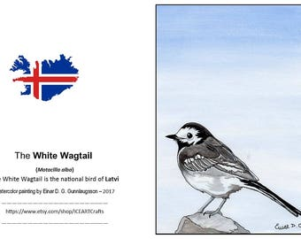 10 postcards with a picture of the beautiful White Wagtail .