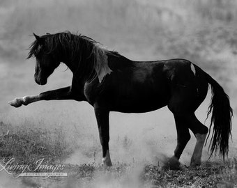 Wild Spanish Walk - Fine Art Wild Horse Photograph - Wild Horse - Black and White - Fine Art Print
