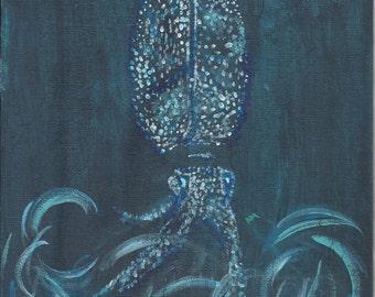 Firefly squid art print