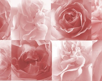 rose petals digital papers, pale pink digital papers, rose petals backgrounds, rose background - set of 8