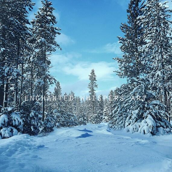 winter Photoshop digital background