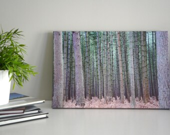 In The Pines - Forest Photograph on Canvas, Nature Photography, Wrapped Canvas, Ready to Hang