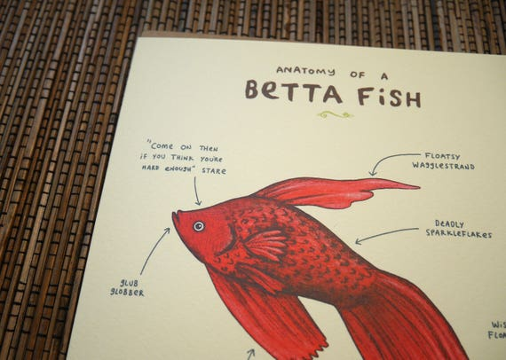 Anatomy of a Betta Fish Card