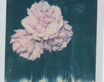 One of kind flower Polaroid