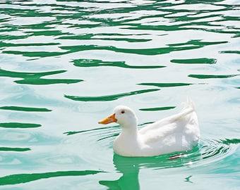 Duck - Wall Decor - Fine Art Photography Print - Blue, Teal, Aqua, Water, White
