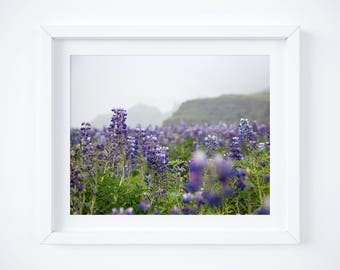 Fine art wildflowers print - Iceland landscape photo - Travel photography - Large wall art - Nature print - Iceland photos - Lupines flowers
