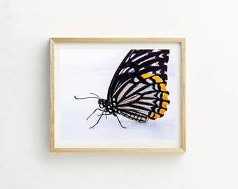 Butterfly Print |  Butterfly Printable Art |  Instant Download |  Butterfly Photography | Butterfly Art | Butterfly Print | Wall Art