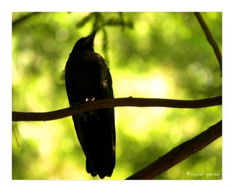 Baby Black Crow In The Forest Photograph Affordable Home Photography Prints Nature Photography Decor Nature Lover Woodland Scene