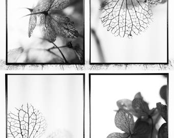 Set of 4 Photographs, Black and White Wall Art, Set of 4 Pictures, Macro Photography Digital Photo Download Digital Photographs Nature Photo
