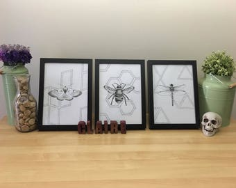Creepy Crawly Series Set of 3 Bee, Moth and Dragonfly