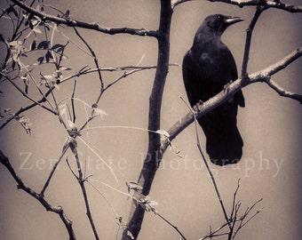 Raven Photography Black Bird Photo Print Gothic Wall Decor Silhouette Art Crow Photograph Unframed Photography, Framed Print, Gallery Canvas