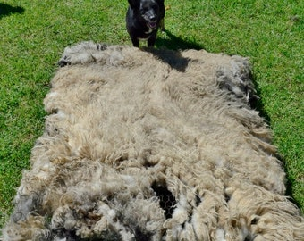 Reggie, Icelandic Fleece, Spring 2018, Raw, Unwashed, Natural, Cruelty Free, Possible Faux Sheep Skin 12.00 per pound