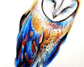 Colorful owl drawing